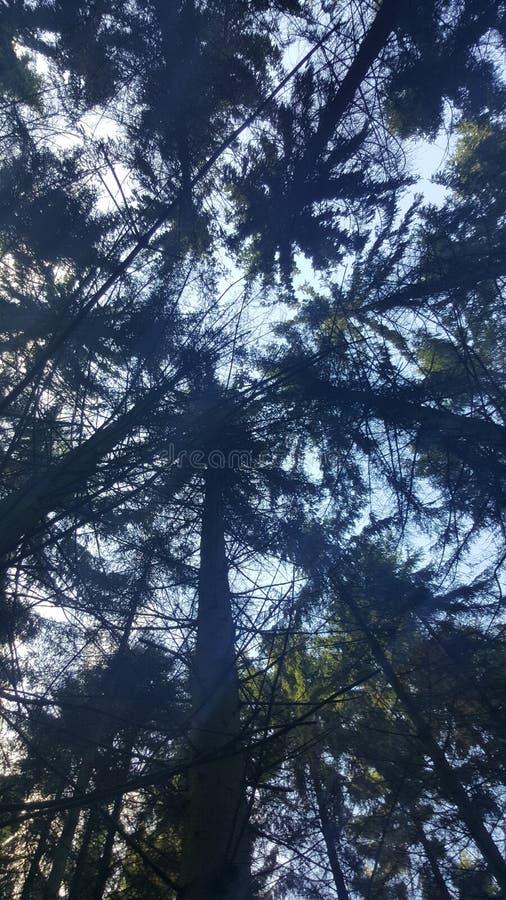 Sikt på träden royaltyfri foto