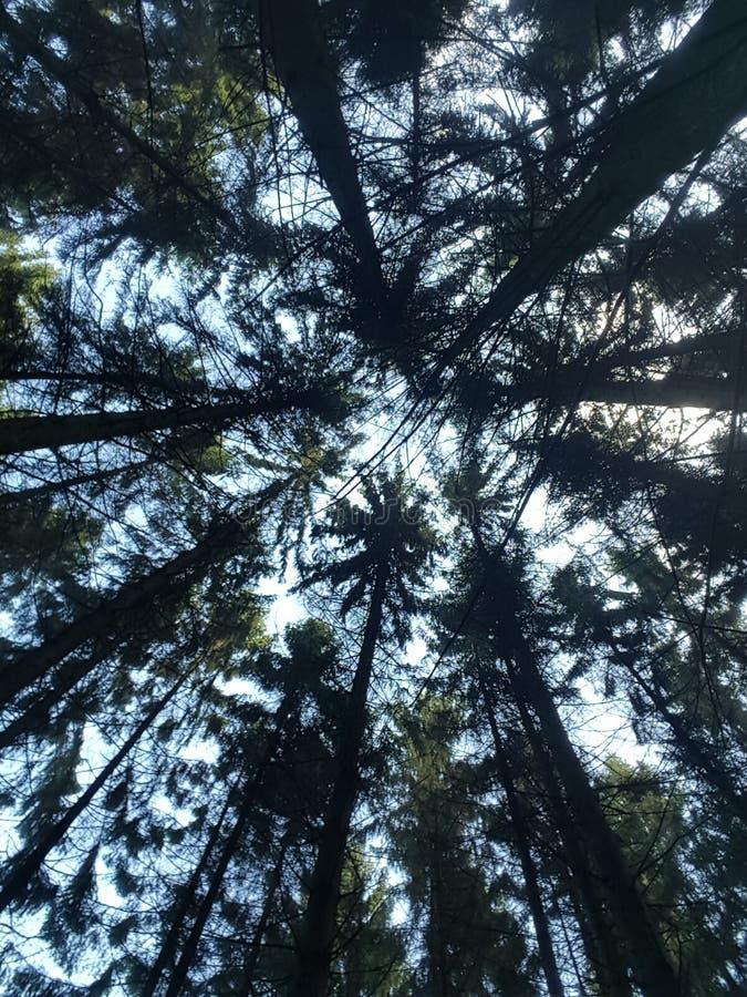 Sikt på träden arkivbilder