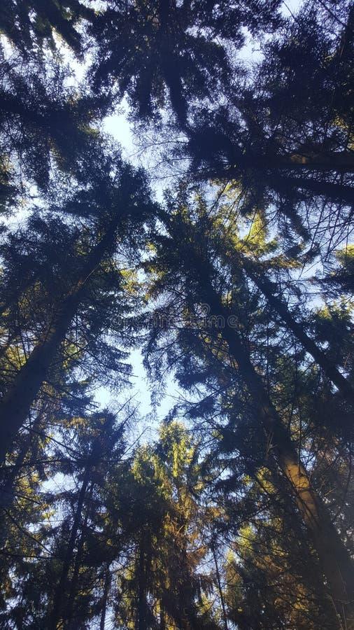 Sikt på träden royaltyfri fotografi