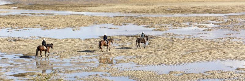 Sikt på tre hästryttare som finner deras väg på stranden på en trevlig dag royaltyfria foton