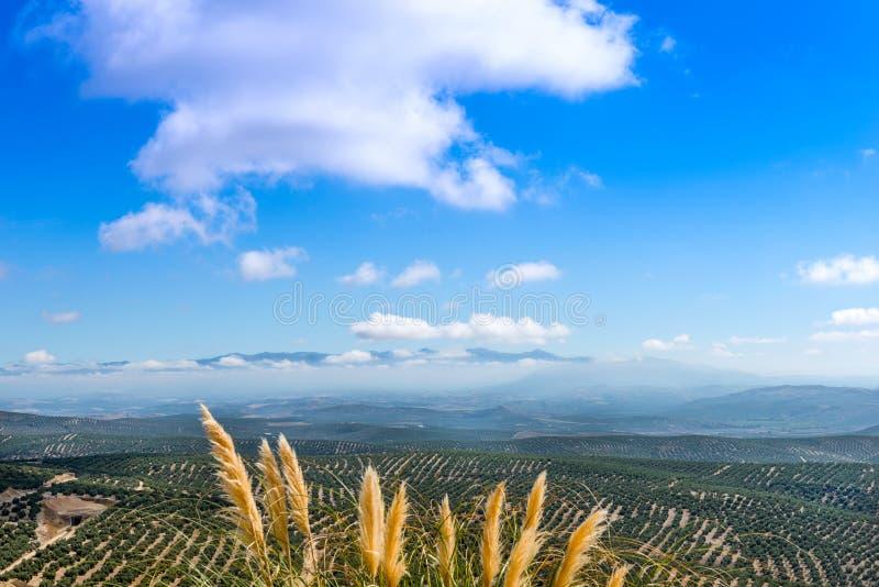Sikt som är södra från Ubeda royaltyfri fotografi