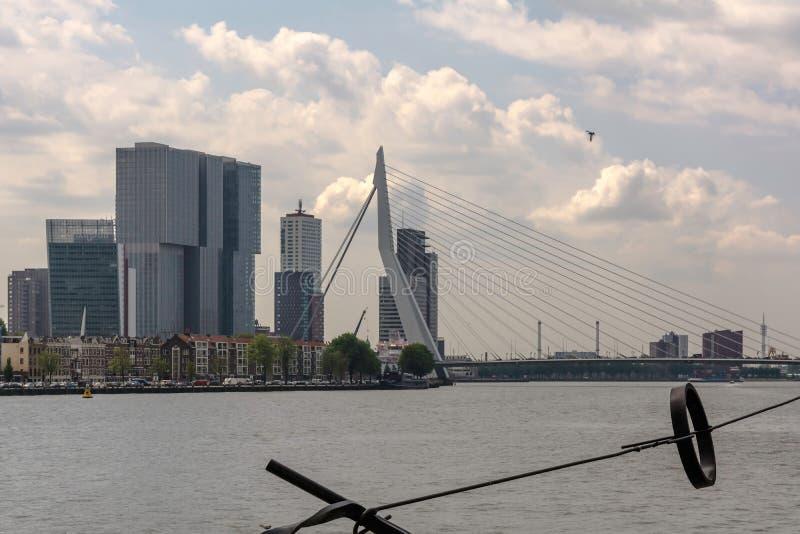Sikt till Erasmusbrug Erasmus Bridge från över den Nieuwe Maas floden royaltyfri foto