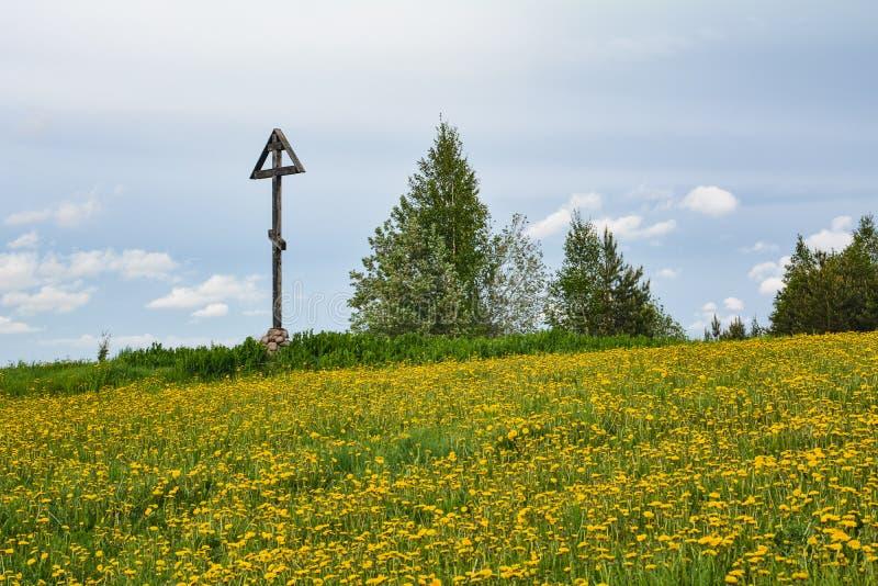 Sikt till maskrosorna på ett fält under en blå himmel royaltyfria bilder