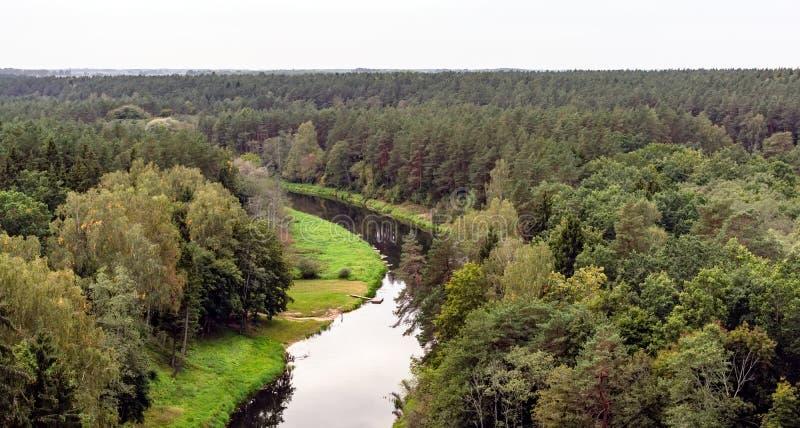 Sikt till tallskogtreetopsna och den spolande Sventoji floden arkivbild