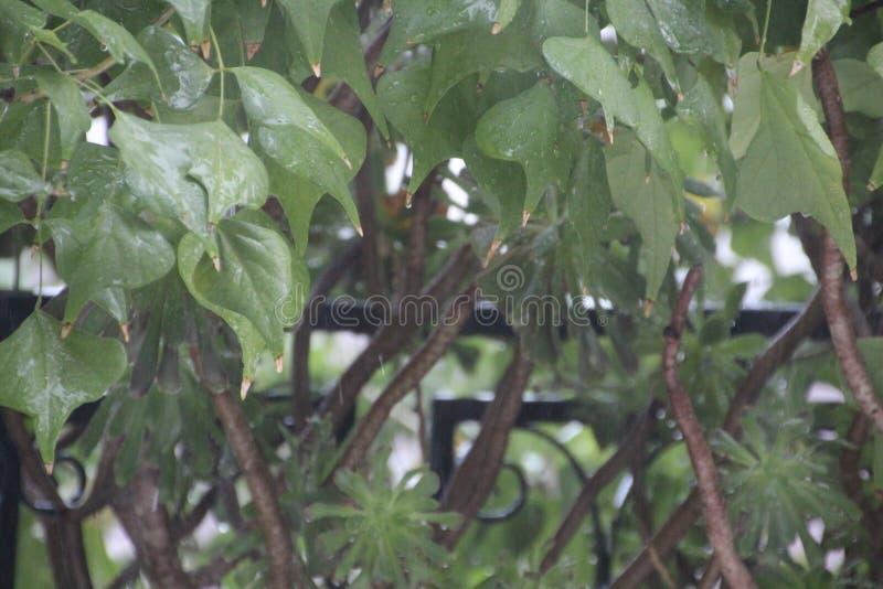Sikt till trädet i fönster och balkong arkivfoto