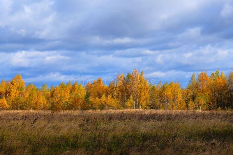 Sikten av ängen i hösten royaltyfri bild