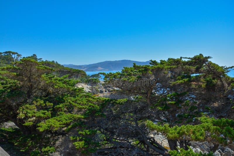 Sikten av cypresskullar från den 17 mil vägen i den Kalifornien kusten royaltyfri bild