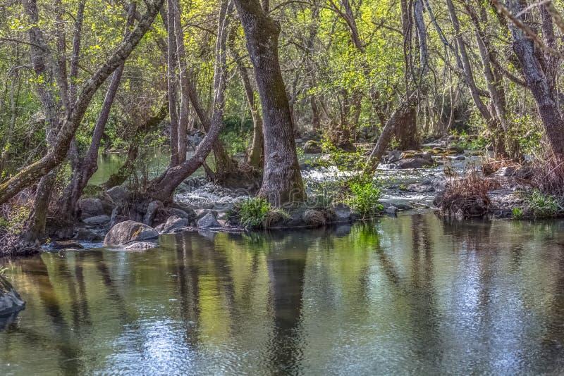 Sikten av den DÃo floden, med träd, vaggar och vegetation på bankerna, reflexioner i vattnet och ljusa färger royaltyfri fotografi
