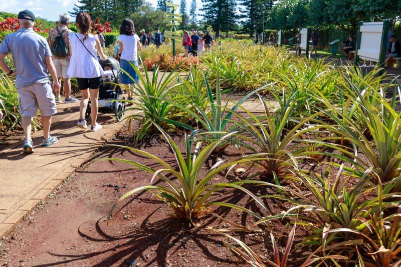 Sikten av den Dole ananaskolonin i Wahiawa, turnerar destinationen royaltyfri fotografi