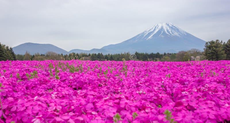 Sikten av den härliga rosa mossafloxen eller shiba-sakura fält i shibazakurafestival framme av Mt Fuji, Fujikawaguchiko, Japan arkivfoton