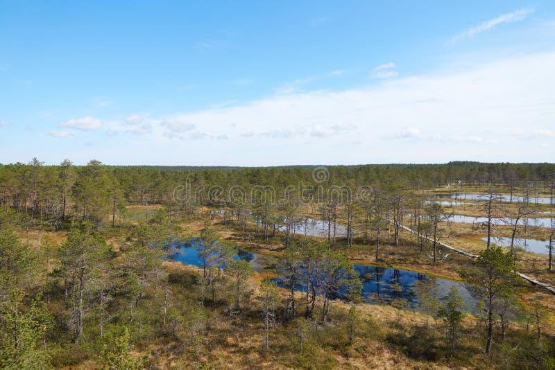 Sikten av det estonian Viru Raba myrlandskapet med flera små sjöar och en liten barrskog av granar och sörjer med ett trä arkivbild