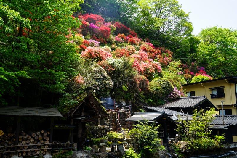 Sikten av färgrikt blomma blommar på kullen, gröna träd, och lokala hus på solig dag i Kurokawa onsen staden royaltyfria foton