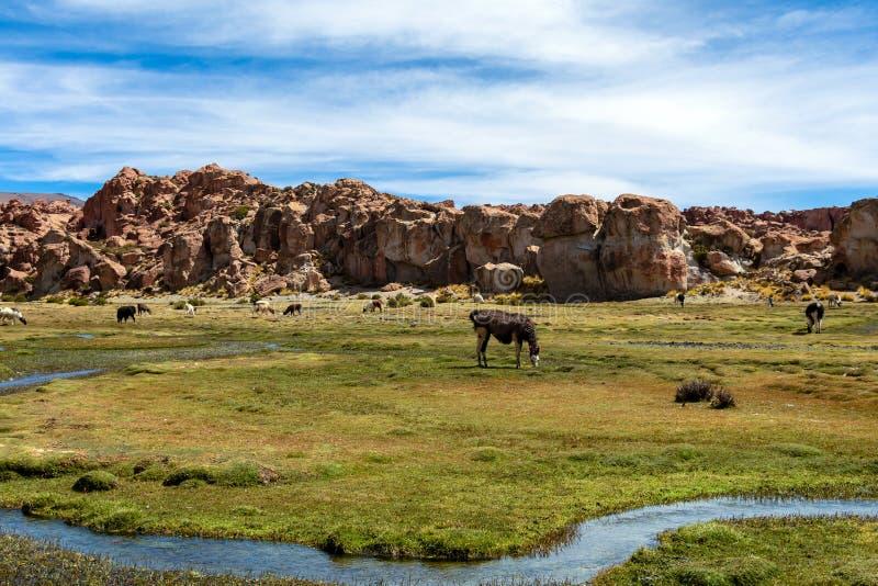 Sikten av Lagunaen Negra, den svarta lagunkanjonen med unikt geologiskt vaggar bildande i Altiplano, Bolivia arkivbild