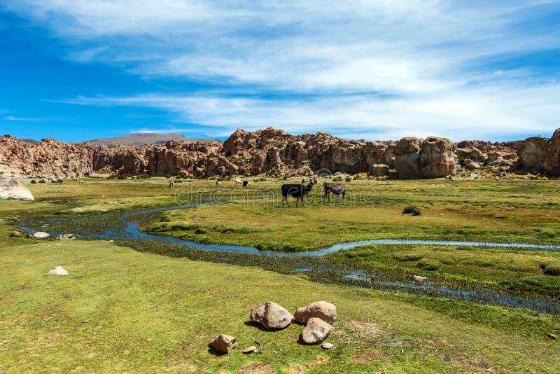 Sikten av Lagunaen Negra, den svarta lagunkanjonen med unikt geologiskt vaggar bildande i Altiplano, Bolivia arkivfoto