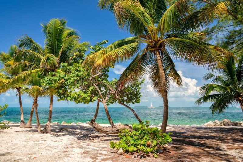 Sikten av trevlig tropisk bakgrund med kokosnöten gömma i handflatan royaltyfri fotografi