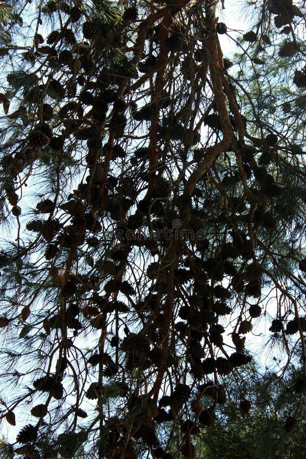 Sikten för blå himmel sörjer igenom konturn för trädfilialer royaltyfri fotografi