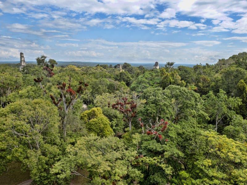 Sikten från en pyramidhöjd som döljas i en tät skognations viktigaste Mayan stad av Tikal, parkerar, Guatemala arkivbild