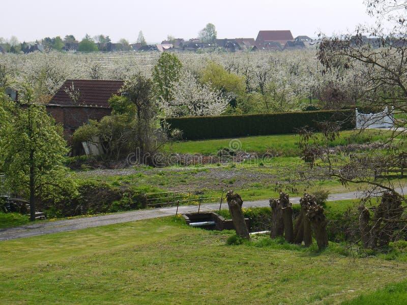 Sikten med ängen, träd och banan, kolonin för körsbärsröda träd för blomningen, träd band till poler, by i stark suddig bakgrund arkivbild