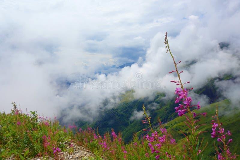 Sikten med blommor från Gorvashi passerar på en fotvandra slinga som täckas, i moln och att leda från Ushguli till Chvelpi, Kauka royaltyfri foto