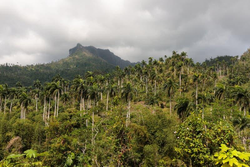 Sikten på djungel med gömma i handflatan på nationalparkalejandroen de humboldt nära baracoaKuba arkivfoton