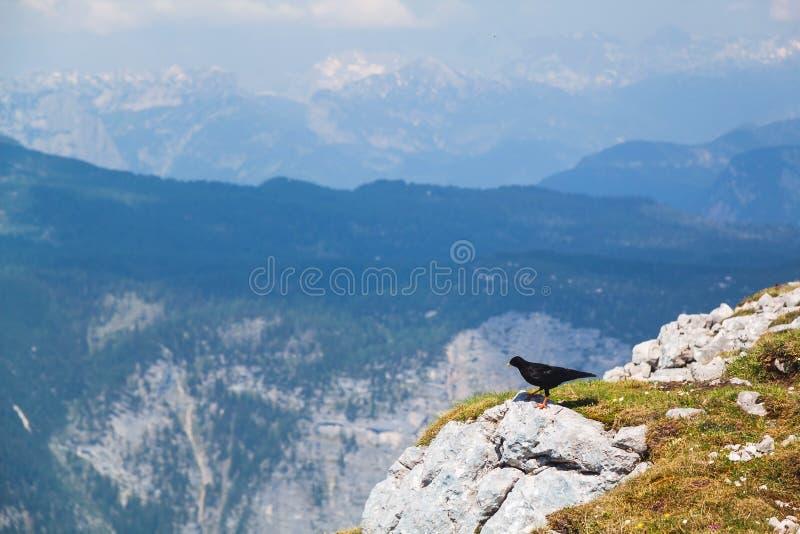 Sikten på fjällängar, vaggar och den svarta fågeln från den Krippenstein platån i österrikiska fjällängar arkivbilder
