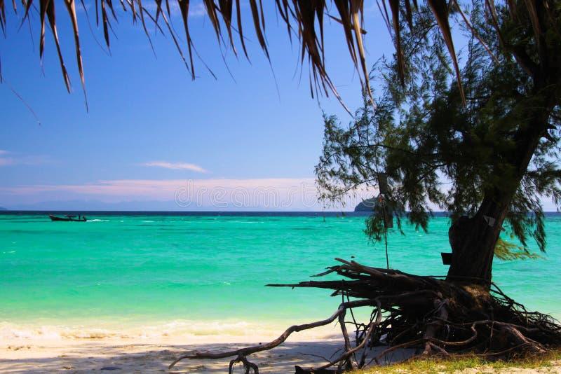 Sikten på turkosvatten med det krokiga trädet rotar och den vita sandstranden på Ko Lipe, Thailand royaltyfria foton