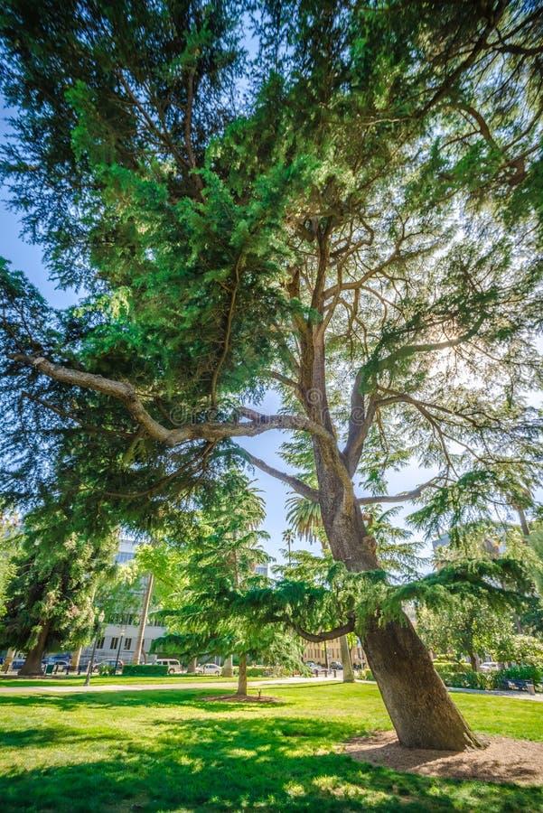 Sikter för för Sacramento Kalifornien stadshorisont och gata royaltyfria foton