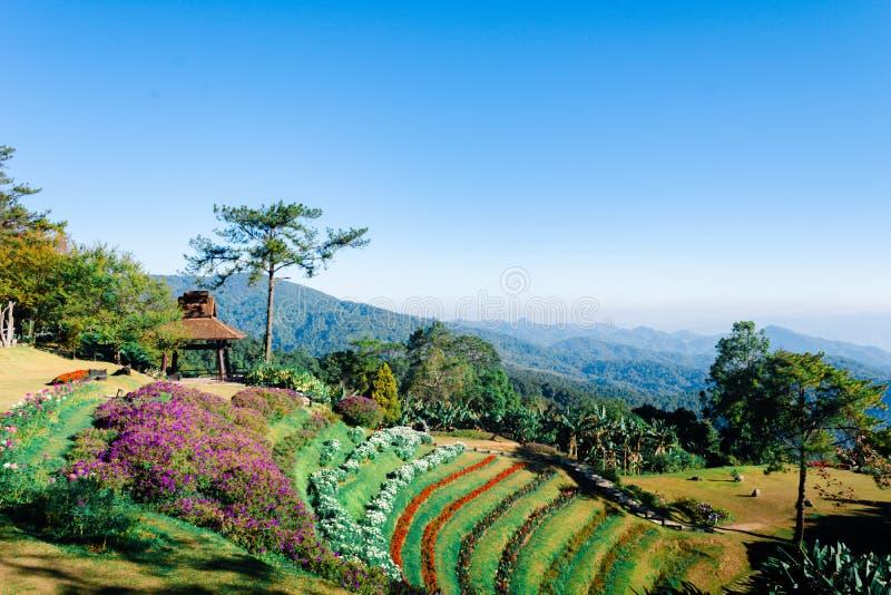 Siktspunkt av trädet, dimma och berget scen äter Huai Nam Dang National Park, Chingmai royaltyfri bild