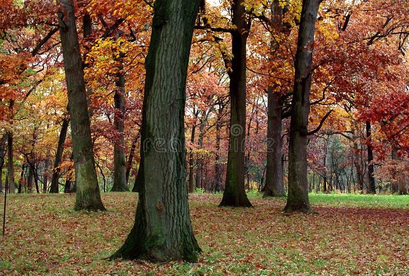 Download Silêncio do outono imagem de stock. Imagem de chuva, carvalho - 530603