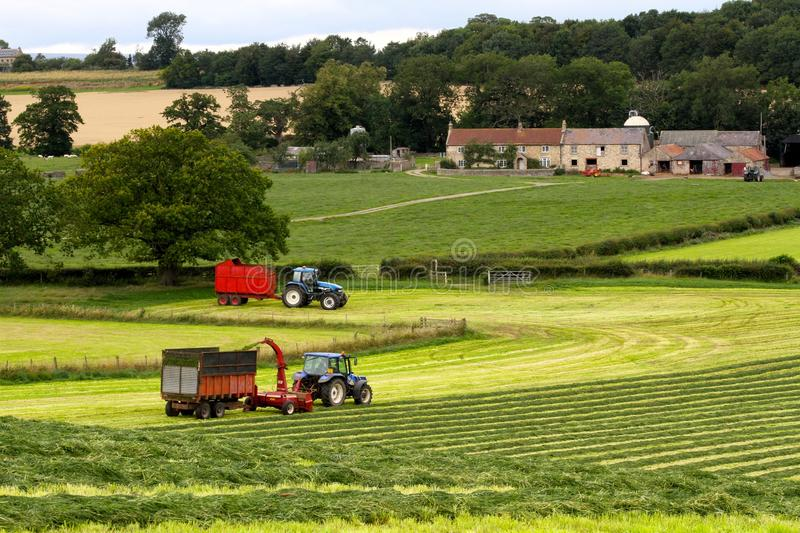 Silaging in County Durham. Farmers make the most of the sunshine to bring in the silage crop on this dairy farm. The forager sprays the crop into the trailer and stock photos