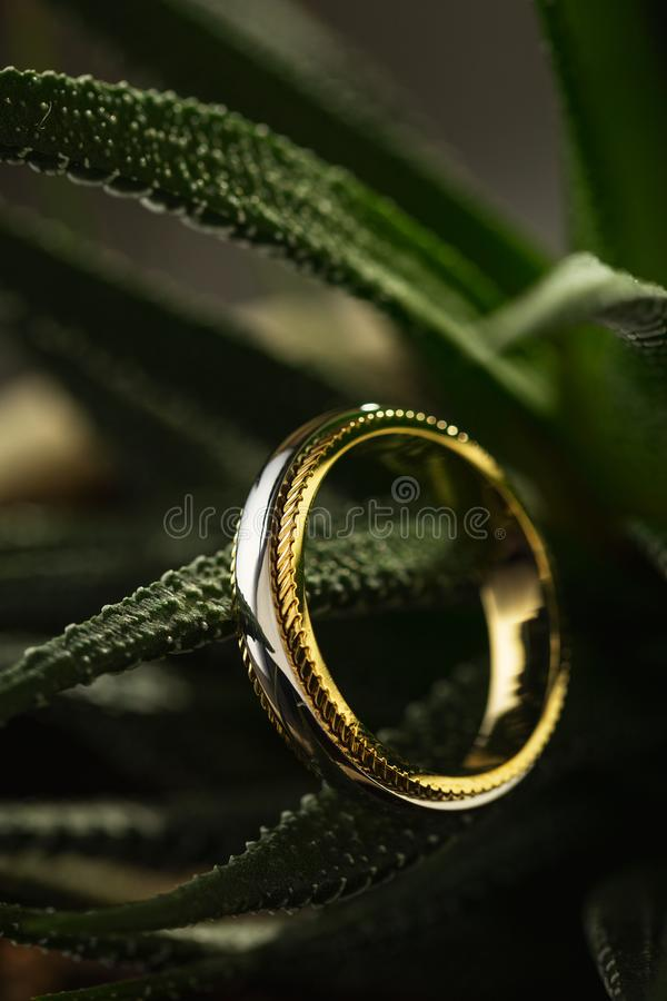 Silber- und Goldring auf dunkelgrünem Kaktushintergrund stockbild