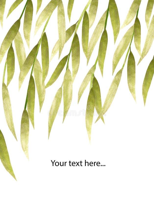 Silber und handgemalte Weide des Grüns verlässt auf weißem Hintergrund mit Platz für Ihren Text vektor abbildung
