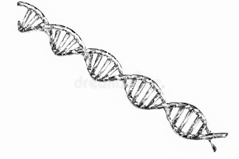 Silberne DNA-Struktur auf weißem Hintergrund stockbild