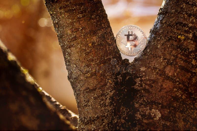 Silberne gebissene Münze im Baum an der Natur mit rauchigem Hintergrund lizenzfreie stockbilder