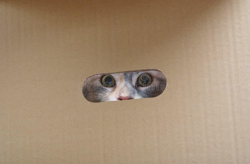 Silberne Katze im Papierkasten. lizenzfreies stockbild