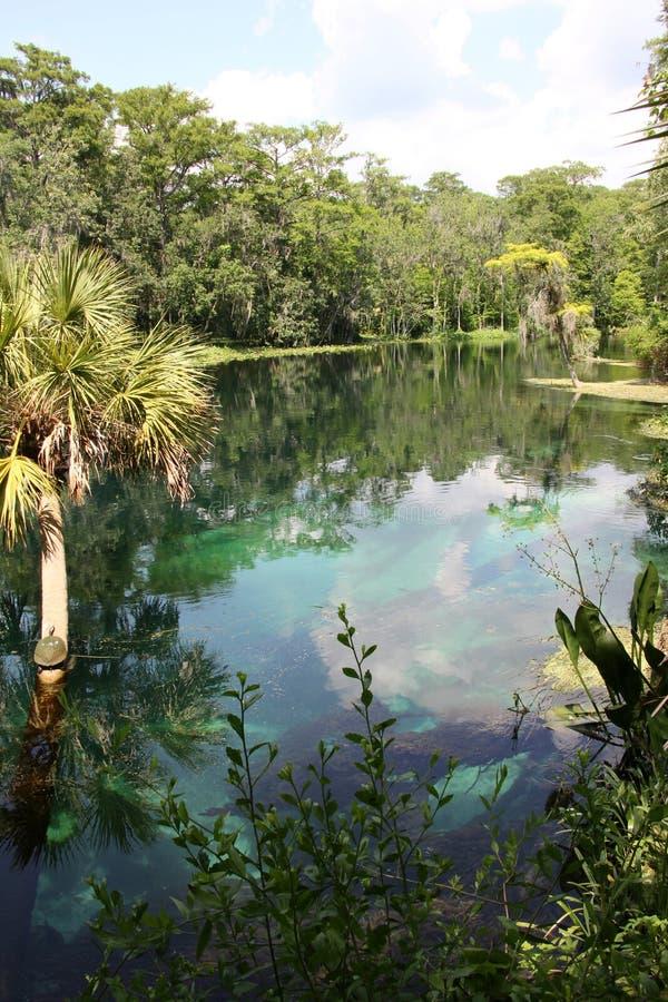 Silberner Fluss Florida lizenzfreie stockfotografie