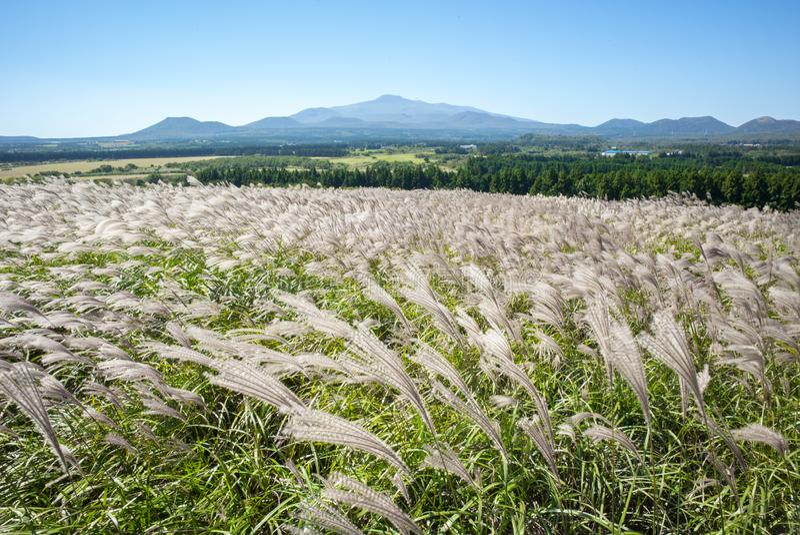 Silbernes Gras Sangumburi-Kraters lizenzfreies stockfoto