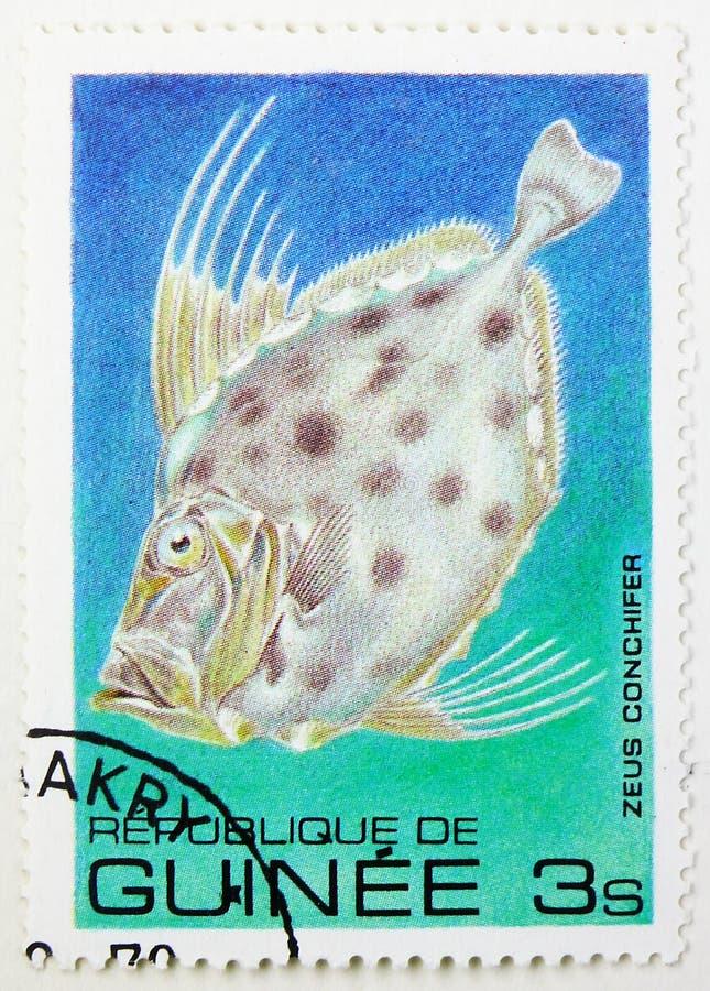 Silbriger John Dory (Zeus-conchifer), Fische serie, circa 1980 lizenzfreies stockbild