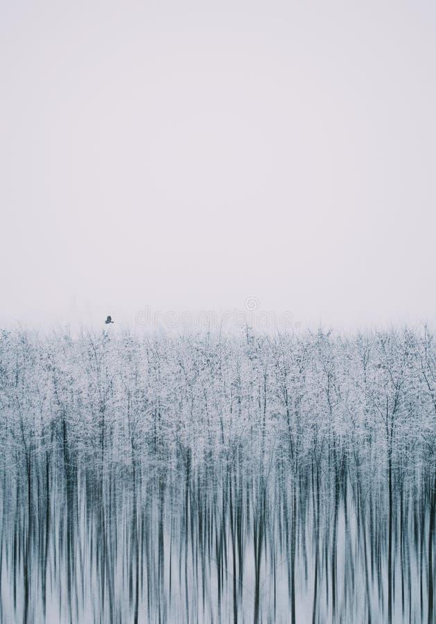 Silenc av naturen Det är en konstnärlig bild om vinter royaltyfria bilder