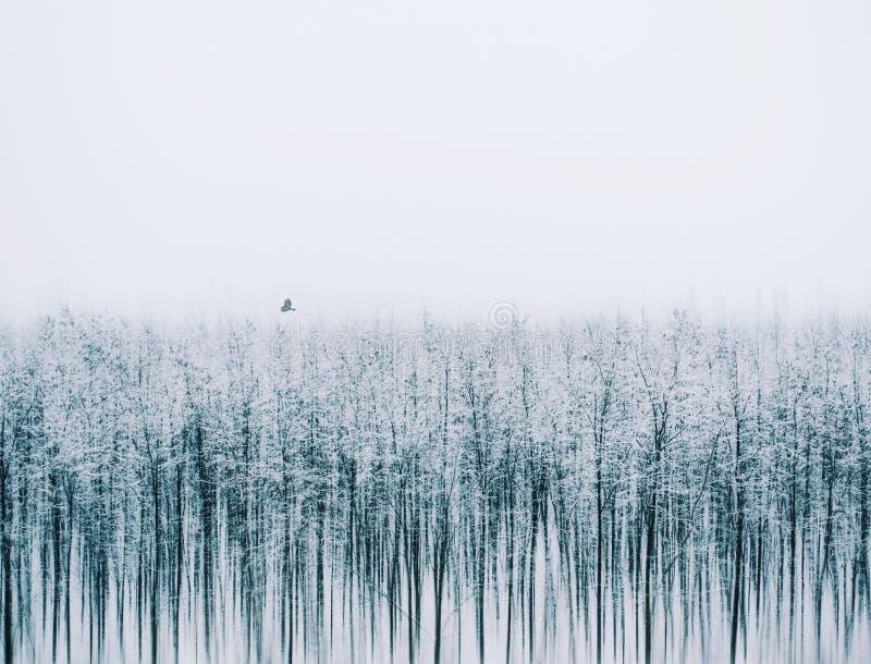 Silenc av naturen Det är en konstnärlig bild om vinter arkivbilder