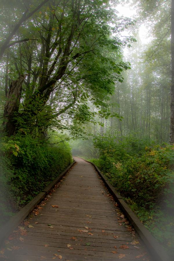 Misty morning along the boardwalk through the forest. Silence and peace can be found on a misty morning saunter or job along this boardwalk trail through the royalty free stock photos