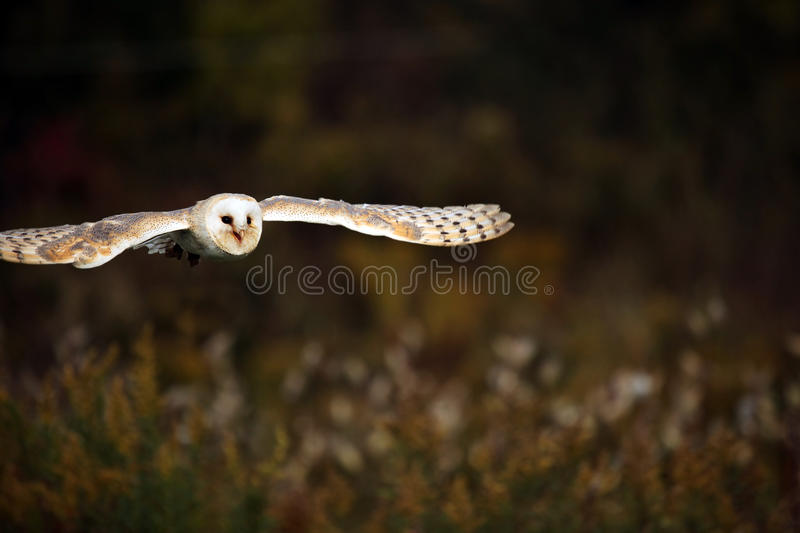 Download Silent Flight Stock Photo - Image: 11445910