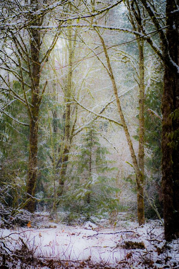 Silent Snowfall in a Wooded Landscape royalty free stock photography