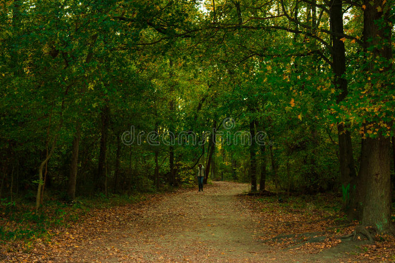 Silent Woods royalty free stock images