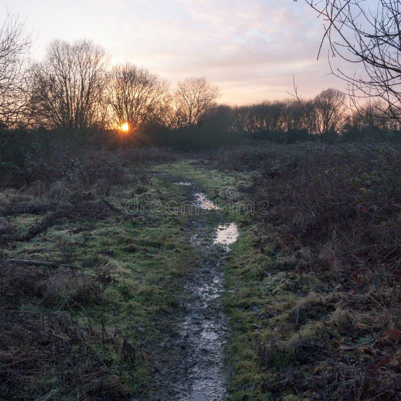 silhouet захода солнца дорожки следа пути влажной полузатопленной страны тинное стоковое фото
