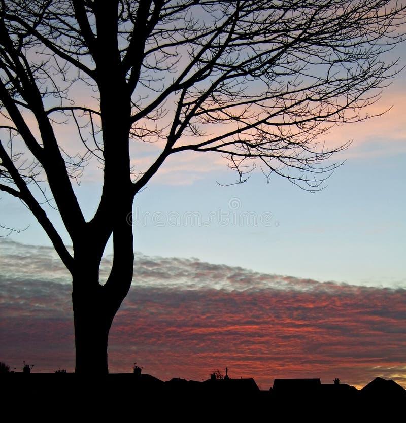 Silhouet 2 van de Boom van de zonsondergang stock foto's