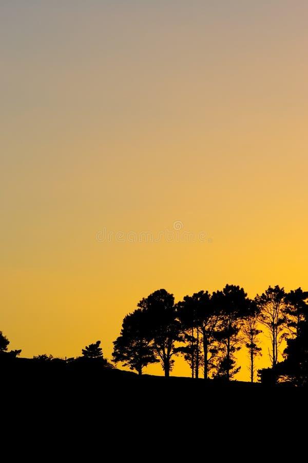 Download Silhouet #3 stock afbeelding. Afbeelding bestaande uit sinaasappel - 278017