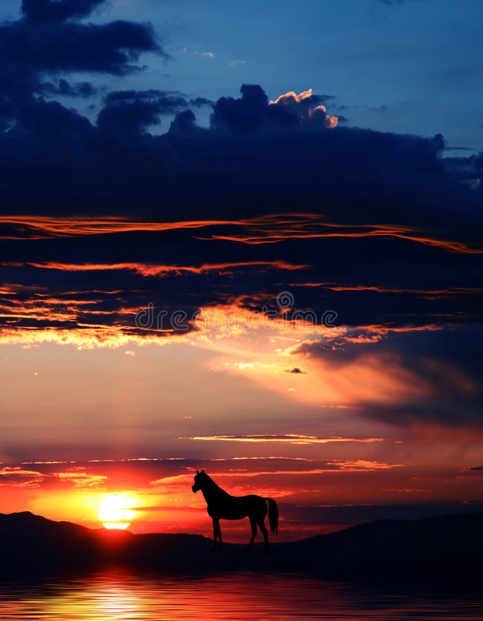 Silhouet 3 van het paard stock illustratie