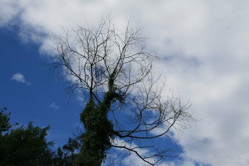Silhouet d'un arbre sur l'air bleu avec des nuages images libres de droits