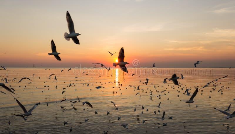 Silhouet die van Vogel over Overzees vliegen stock fotografie